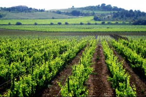 30_-Vignes-du-Chateau-de-Paraza-_-Collines_web