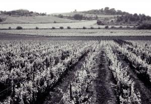 30_-Vignes-du-Chateau-de-Paraza-_-Collines_NB