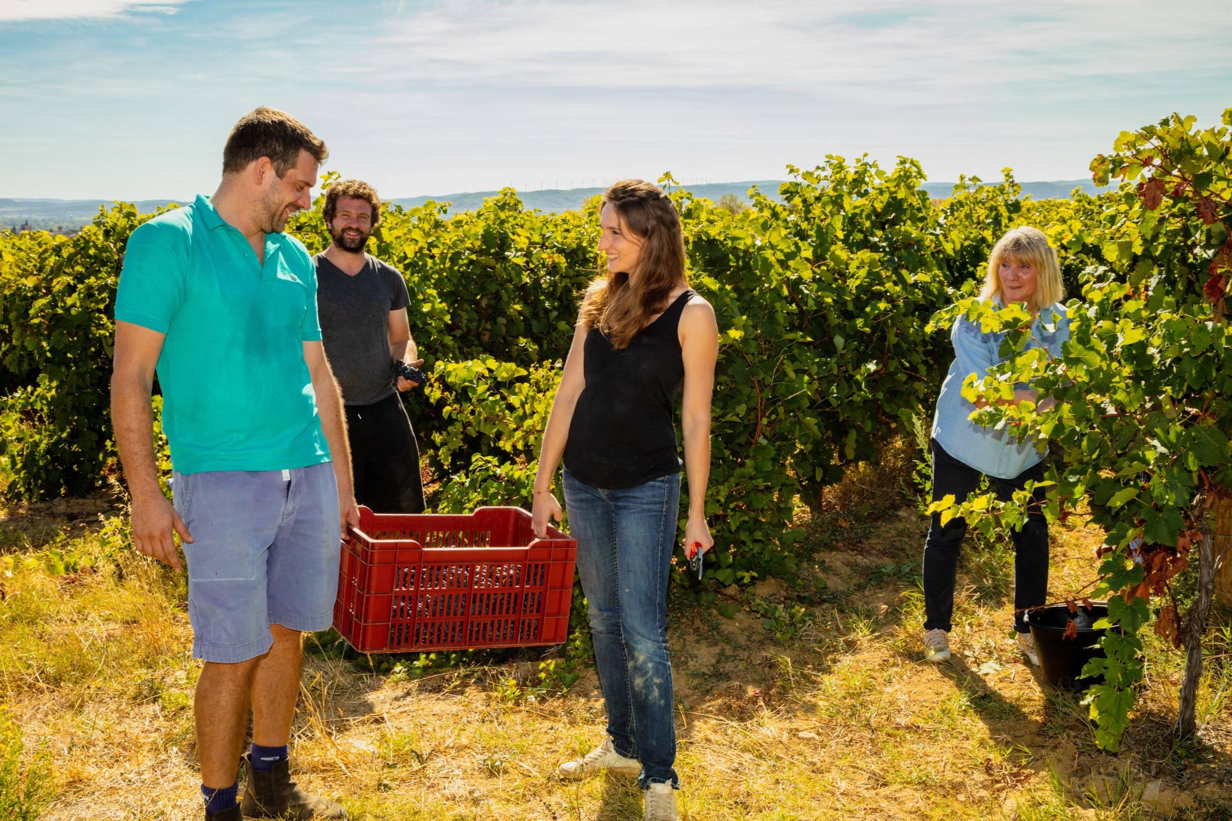 vin minervois vendanges