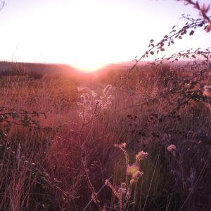 Lever du soleil pendant les vendanges au Château de Paraza dans le Minervois