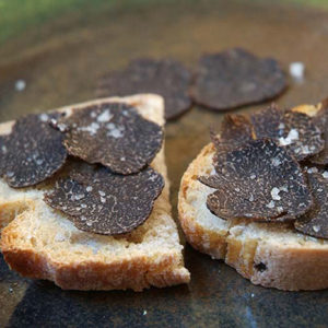 truffle workshop